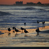 Gulls at Myrtle Beach State Park, SC