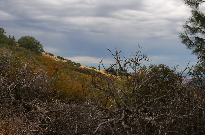 Mount Diablo, 2009