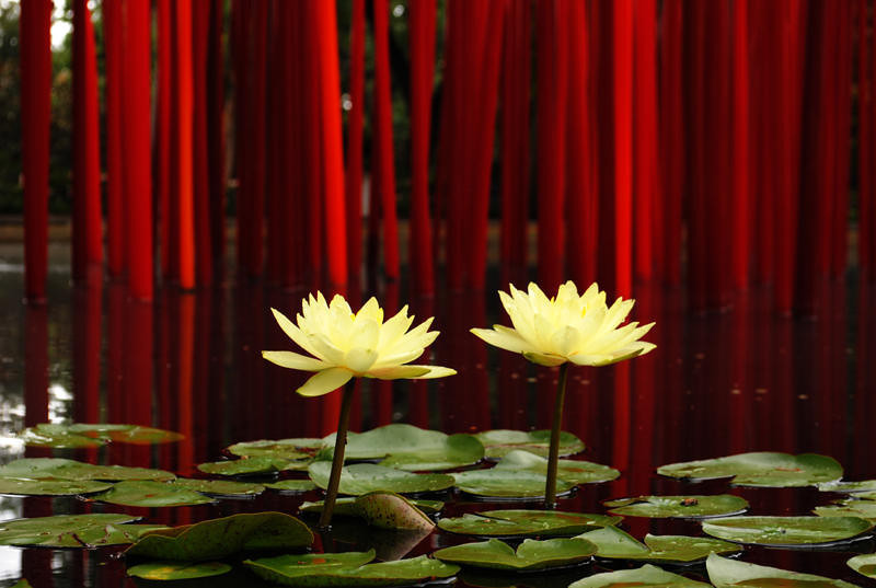 Arboretum - Flowers and Chihuly