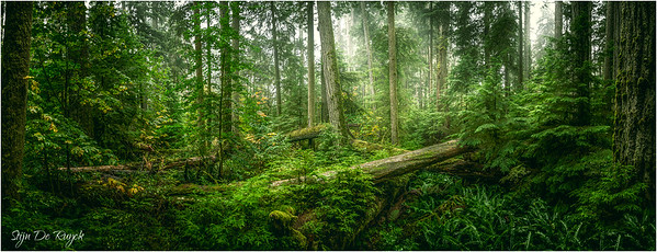 Cathedral Grove, MacMillan Provincial Park, British Columbia