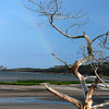 Whole trees as driftwood<br /> Rainbow<br /> <br /> Big Talbot Island State Park<br /> <br /> Jacksonville, Florida