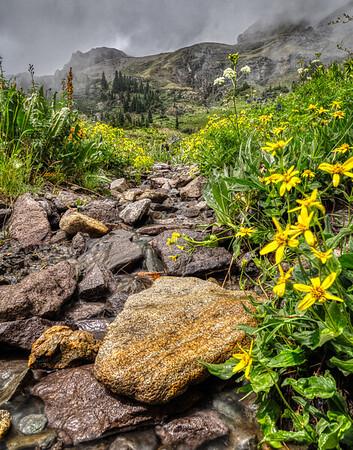 Rocky stream flowers