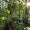 (2658) Triplet Falls, Victoria, Australia