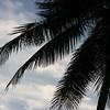 """Tropical Silhouette"" #04"