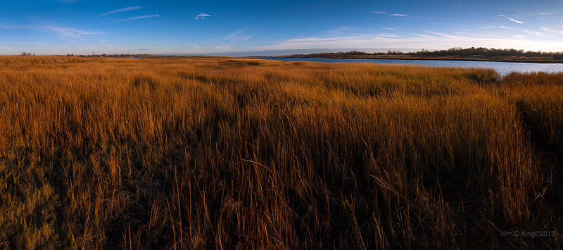 Salt Marsh Nature Center