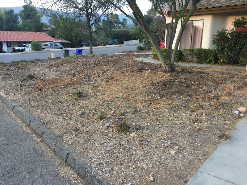 Hard to see, but we laid out with orange spray paint where the basic hardscape features will be installed.