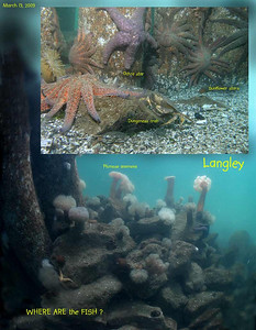 Langey Tire Reef, March 13, 2009