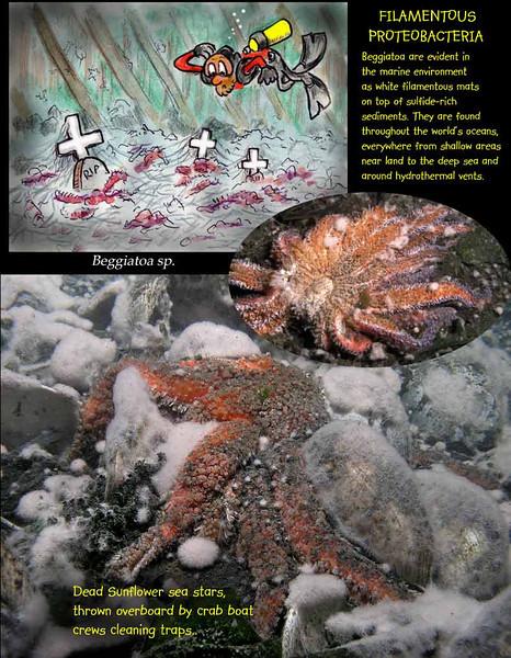 Decomposing bacteria - Langley harbor. March 22, 2009