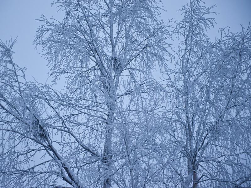 December midday, Finnish Lapland.