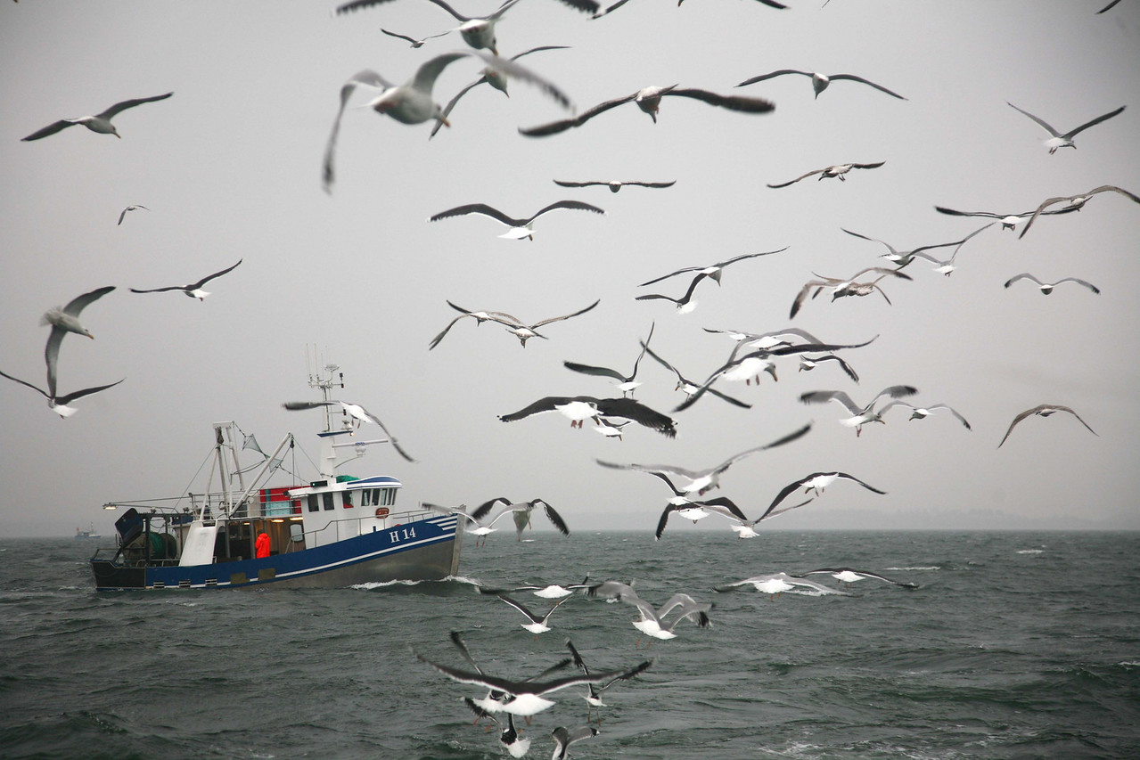 Lincoln Benedict / Photojournalism Project, Feb. 2008<br /> Flocks of seagulls follow the boat everywhere, picking up the discarded guts of the fish cleaned by the crew.