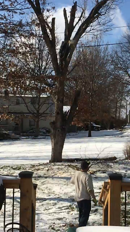 Large Tree in Backyard Cut Down