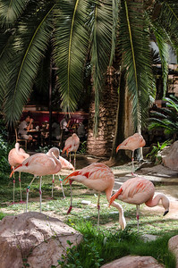 Flamingos at the Flamingo. No, they aren't plastic. :-)