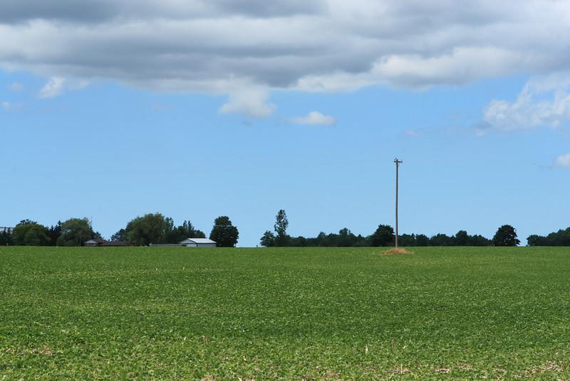 Green Crop Field in Ontario
