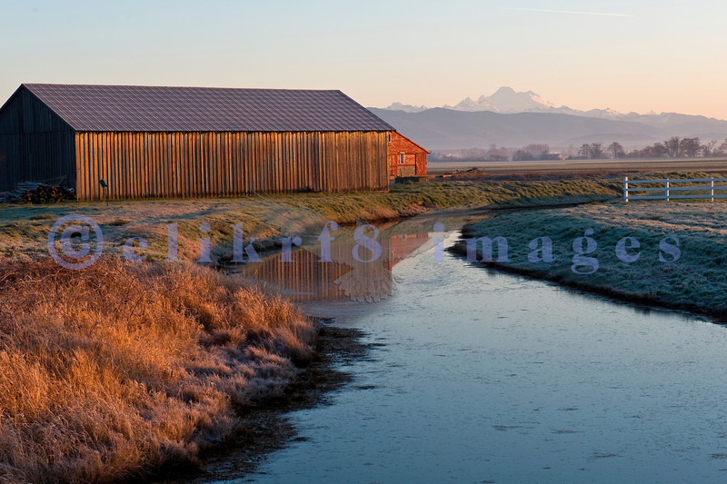 On the Skagit Valley flats, you can find many farms like these protected from the Skagit River floods by an intensive and extensive diking system.