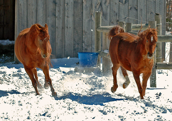 """<div class=""""jaDesc""""> <h4> Shiloh and Bronzz Ready to Romp in the Snow </h4> </div>"""