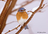 "<div class=""jaDesc""> <h4> Male Bluebird on Snowy Perch</h4> </div>"