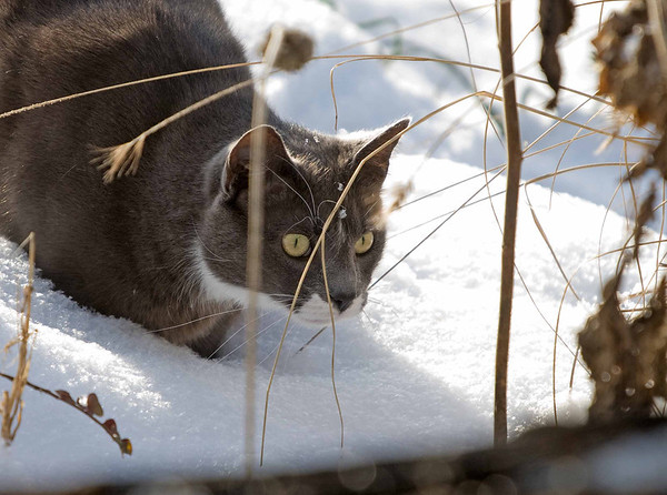 """<div class=""""jaDesc""""> <h4> Phantom Watching a Mouse in the Snow </h4> </div>"""