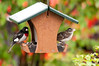 """<div class=""""jaDesc""""> <h4> Grosbeak Pair Dining Together - May 16, 2011 - Video Attached </h4> <p>The Rose-breasted Grosbeaks have paired up.  During courtship, each pair will come into the feeders together but dine on opposite sides. </p> </div> </br> <center> <a href=""""http://www.youtube.com/watch?v=lrrw-SS7IsM"""" class=""""lightbox""""><img src=""""http://d577165.u292.s-gohost.net/images/stories/video_thumb.jpg"""" alt=""""""""/></a> </center>"""