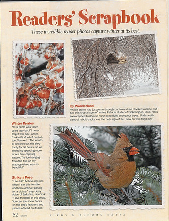 """<div class=""""jaDesc""""> <h4>Birds & Blooms Readers Scrapbook - January 2007 </h4> <p>This award winning shot of a female Northern Cardinal was featured in the Reader's Scrapbook section of the January 2007 edition of Birds & Blooms magazine - page 62.</p> </div>"""