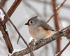 "<div class=""jaDesc""> <h4> Tufted Titmouse on Snowy Morning</h4> </div>"