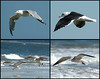 "<div class=""jaDesc""> <h4> Seagull Collage #1 </h4> <P> <p> </div>"
