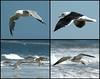 "<div class=""jaDesc""> <h4> Seagull Collage #1 </h4> <P> <p> </div>"