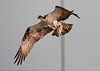 """<div class=""""jaDesc""""> <h4>Gaining Some Altitude to Avoid the Seagulls</h4> <p> </p> </div>"""