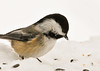 """<div class=""""jaDesc""""> <h4>Chickadee Trying to Decide - December 27, 2012 </h4> <p> This little speedster scanned all the seeds and grabbed one in less than a second.  It took me 10 minutes to got this one shot that was not blurry or no bird in frame at all.</p> </div>"""