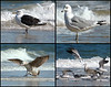 "<div class=""jaDesc""> <h4> Seagull Collage #3 </h4> <P> <p> </div>"