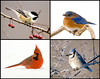 "<div class=""jaDesc""> <h4> Mixed Bird Collage </h4> <P> Chickadee, Bluebird, Cardinal, Blue Jay<p> </div>"
