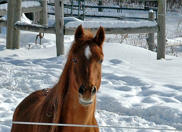 """<div class=""""jaDesc""""> <h4> Bronzz & Shiloh Ready to Romp - January 16, 2010 - Video Attached </h4> <p>  When it is snowing and blowing, Bronzz and Shiloh like to get into serious horseplay. The attached video is 3:40 long. In the first half they are just getting warmed up, but they kick it into high gear in the second half.</p> </div> <center> <a href=""""http://www.youtube.com/watch?v=uPLU3V4QRls""""  style=""""color: #0000FF"""" class=""""lightbox""""><strong> Play Video</strong></a>"""