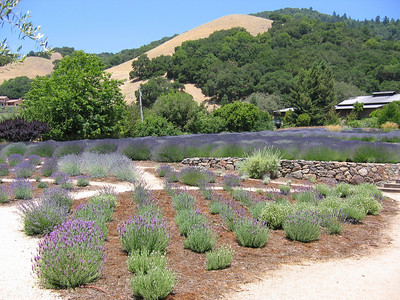 Lavender Fest 2009