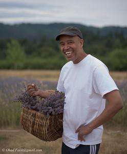 Lavender Fields Forever Yigzaw