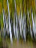 Image #0048.  Contrast Tree Swipe. 2010