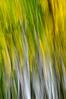 Image #0040.  Color Tree Swipe. 2010