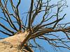 """<p><font size=""""4"""">Des racines dans le ciel </font></p> <p><font size=""""1""""> Roots in the sky</font></p>"""