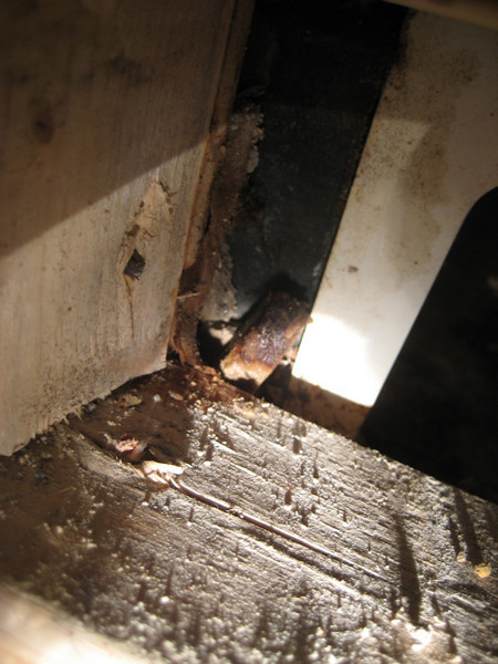 Left hand leg of the neighbor's shower pan. The black surface of wall board gets wet, note wetness on the wood framing and the crumbling moist wall board