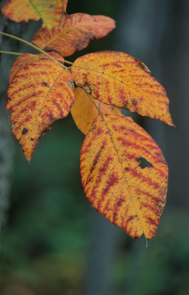 Loneliest Leaves