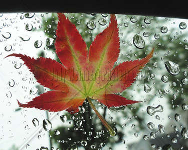 Spring Leaf on Car Window