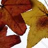 Leaves Cuddling on Sunroof