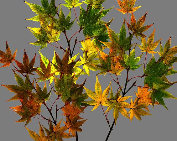 Leaf Dance#16