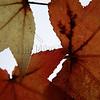 3 leaves on a sunroof.
