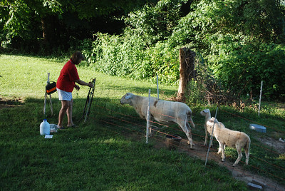 Mom testing the electric fence.  She tested it twice.
