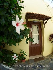 Hibiscus by The Door