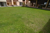 pelouse en ete<br /> lawn in the summer