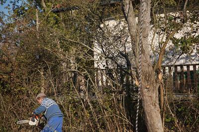 guegain et l'arbre 67