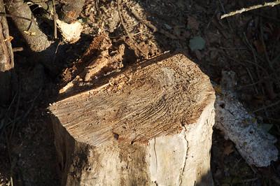 guegain et l'arbre 72