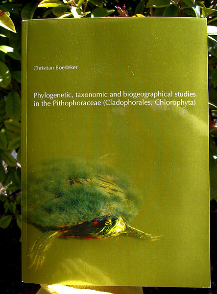 Cover of 'Phylogenetic, taxonomic and biogeographical studies in the Pithophoraceae (Cladophorales, Chlorophyta)' by Christian Boedeker featuring a photograph of mine on the cover (HPIM0034)