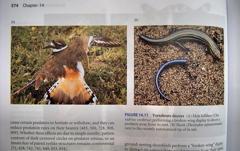 "<a href=""http://xenogere.com/a-textbook-photo/"" title=""A textbook photo"">Blog entry</a>"