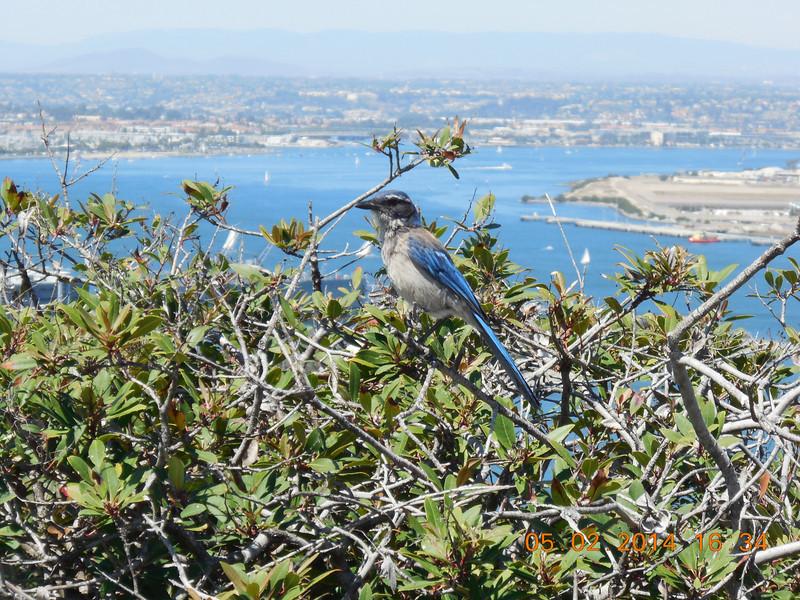 May 2, 2014; Point Loma San Diego CA